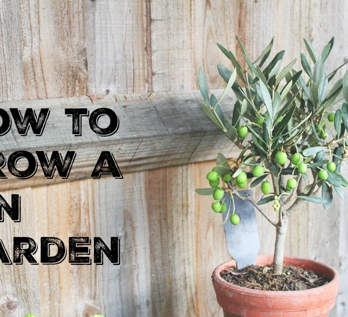 how-to-grow-a-gin-garden