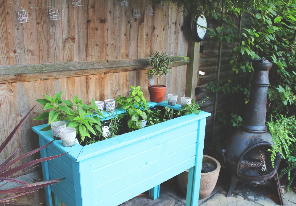 How do you plant a gin garden