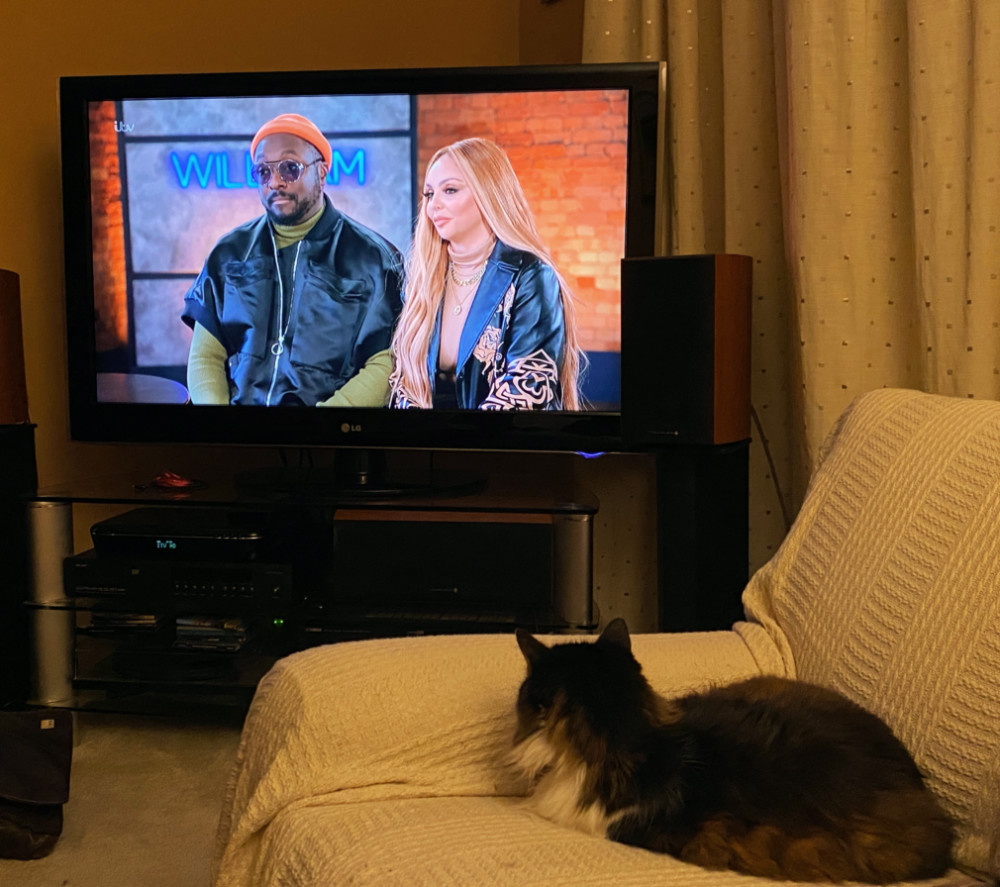 A cat sits on a sofa looking towards the TV. The Voice is on and Will I am is sitting with Jesy from Little Mix