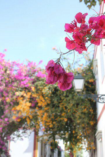 gran-canaria-puerto-mogan-flowers2