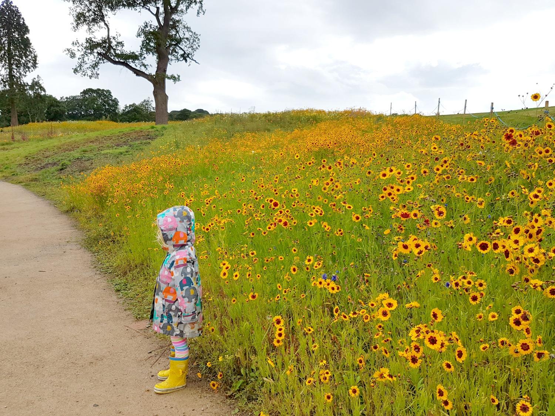 trentham-estate-gardens-meadow-flowers3
