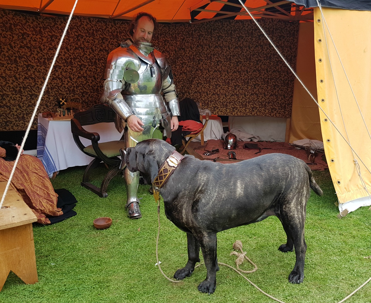 An English mastiff with knight at Hever Castle, Kent - our family day out at Hever Castle with kids