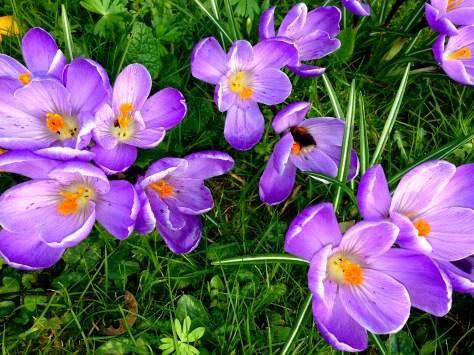 Spring, mumof2, silent sunday