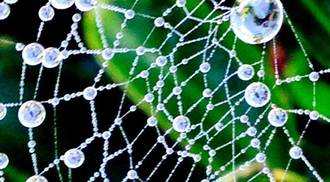 spiderweb, dew, mumof2