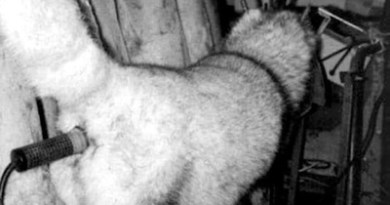 Shocking Treatment Of Beautiful Animals