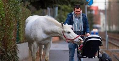 Jenny The Famous Happy Horse
