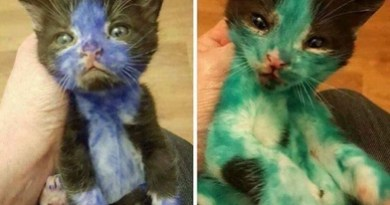 Do Not Give Kittens Away This What Can Happen