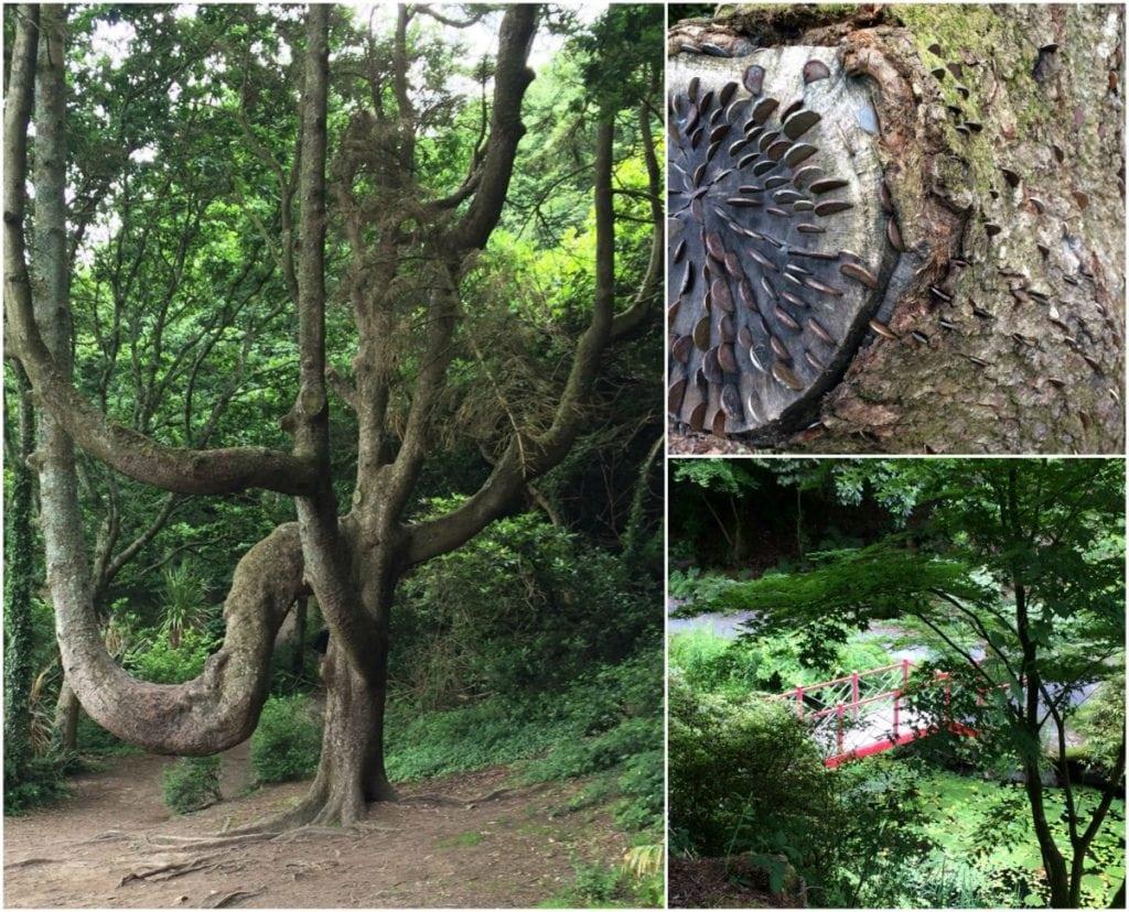 Portmeirion woodland walk