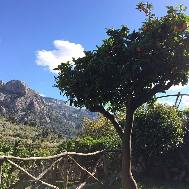 gardens of Petit hotel, Fornalutx