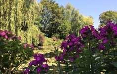 Dark pink flowers in Monet's garden