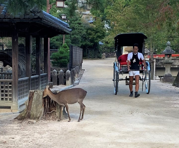 Deer and rickshaw, Miyajima island