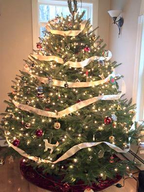 Mamas in Small Biz Series : Sweetie's Christmas Trees Maine. #ShopSmall #Christmas. MumsOrchardHouse.com
