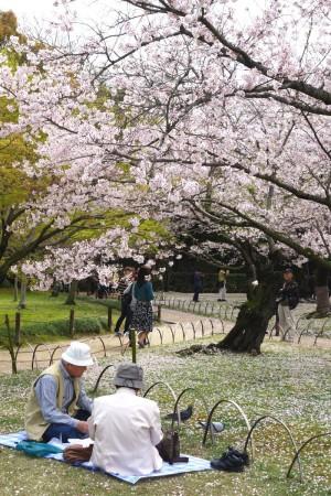 An elderly couple enjoying Hanami @ Korakuen