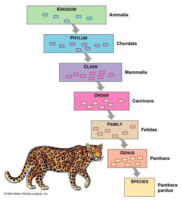 Biological Classification Ranks Quiz Sporcle Games Amp Trivia