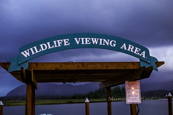 Wildlife Viewing Area at Wheeler Lodge Oregon Coast by Munchkin Time Blog #PNW #wheeleroregon