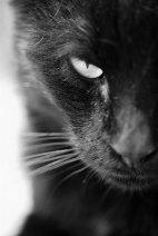 Un gato.