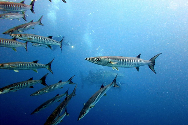 Fotos-submarina-de-Edu