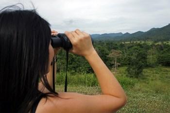 Observando elefantes salvajes en el Parque Nacional de Kui Buri