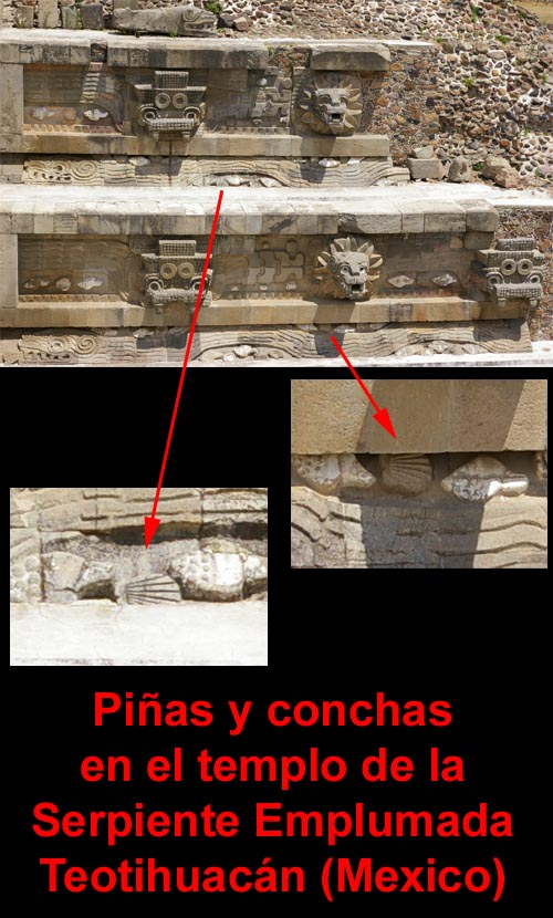 pinas_y_conchas_teotihuacan