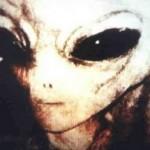 Raza Gris e1332521208313 150x150 Razas Extraterrestres Negativas