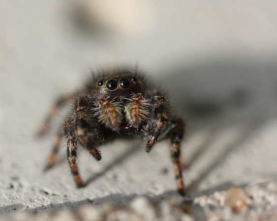 Araignées astrales - Les parasites astraux se manifestent dans notre réalité