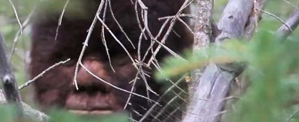 La ciencia demuestra que el Bigfoot existe