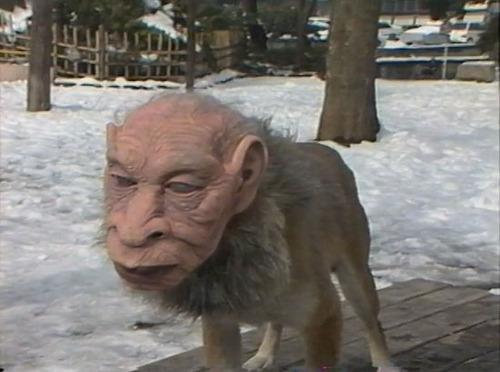 https://i0.wp.com/www.mundoesotericoparanormal.com/wp-content/uploads/2014/03/perros-rostros-humanos-japon.jpg