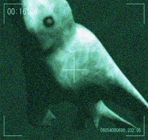 ningen humanoides artico Los Ningen, las criaturas humanoides del Ártico