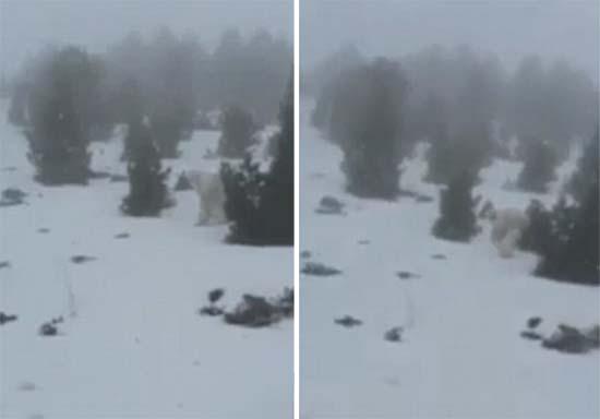 Yeti en el pirineo aragonés