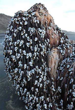 Misteriosa criatura varada playa Nueva Zelanda