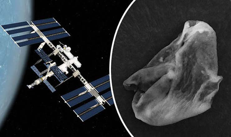 Russian scientists find extraterrestrial life forms