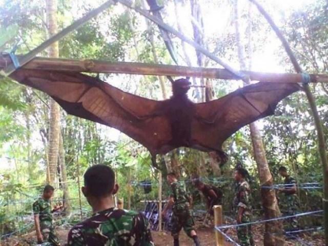 murcielago humano en filipinas - Fotografían un murciélago humano en Filipinas, y no es un zorro volador gigante