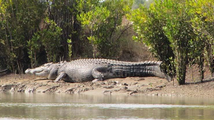 crocodile afrique - Un énorme crocodile qui a mangé 300 personnes est en liberté en Afrique