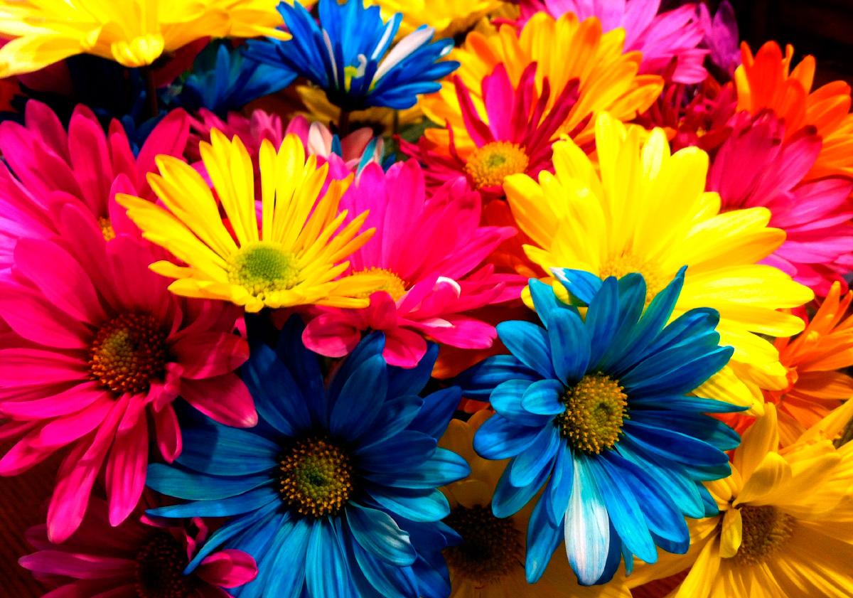 Significado del color de las flores  Mundo Flores