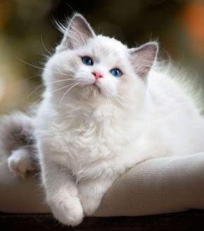 Gato muñeca de trapo de color blanco
