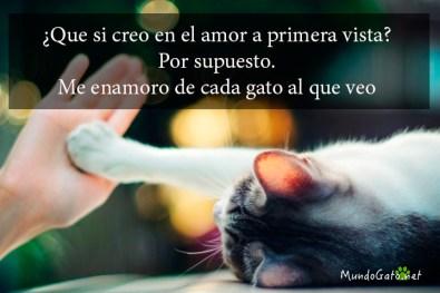 Frases Celebres Para Gatos Mundo Gato