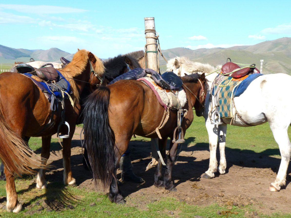 Cavalos 03 Mongólia Mundo Indefinido
