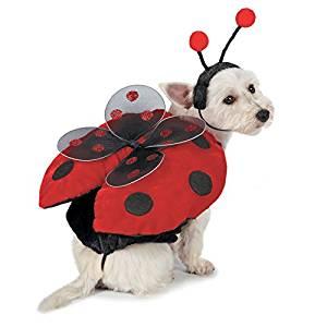 Disfraz Canino de Mariquita - Varias Tallas - mundomariquita.com