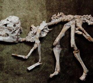 Foto 5: Esqueletos de dinosaurios