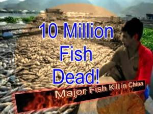 Millones de peces muertos en el río Minjiang de China, 20 septiembre 2011
