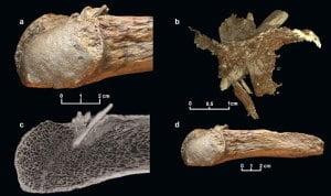Los seres humanos estaban en América del Norte un milenio antes de lo pensado