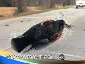 Peces y aves muertas por causas desconocidas, otro año más 2012