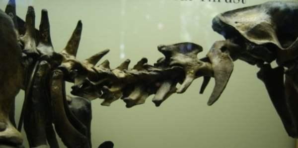 ¿Evidencia de vértebras fosilizadas en Marte?