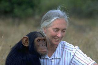 """Hace 11 años, en 2002, Jane Goodall dijo """"Estoy segura de que existen los Bigfoot"""" 1"""
