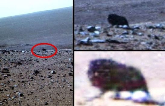 Figura oscura captada por la cámara de la Opportunity