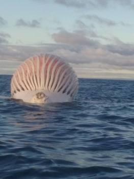 Orbe flotante 'Alien' visto por pescadores en la costa australiana