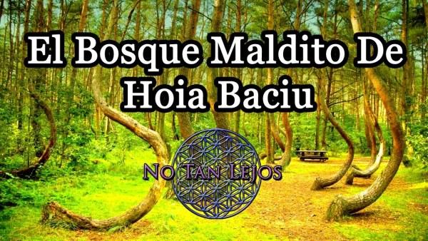 El bosque maldito de Hoia Baciu