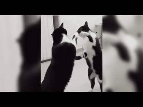 GATO Posa Frente a un Espejo Extrañado por su Reflejo y Sucede Algo PARANORMAL
