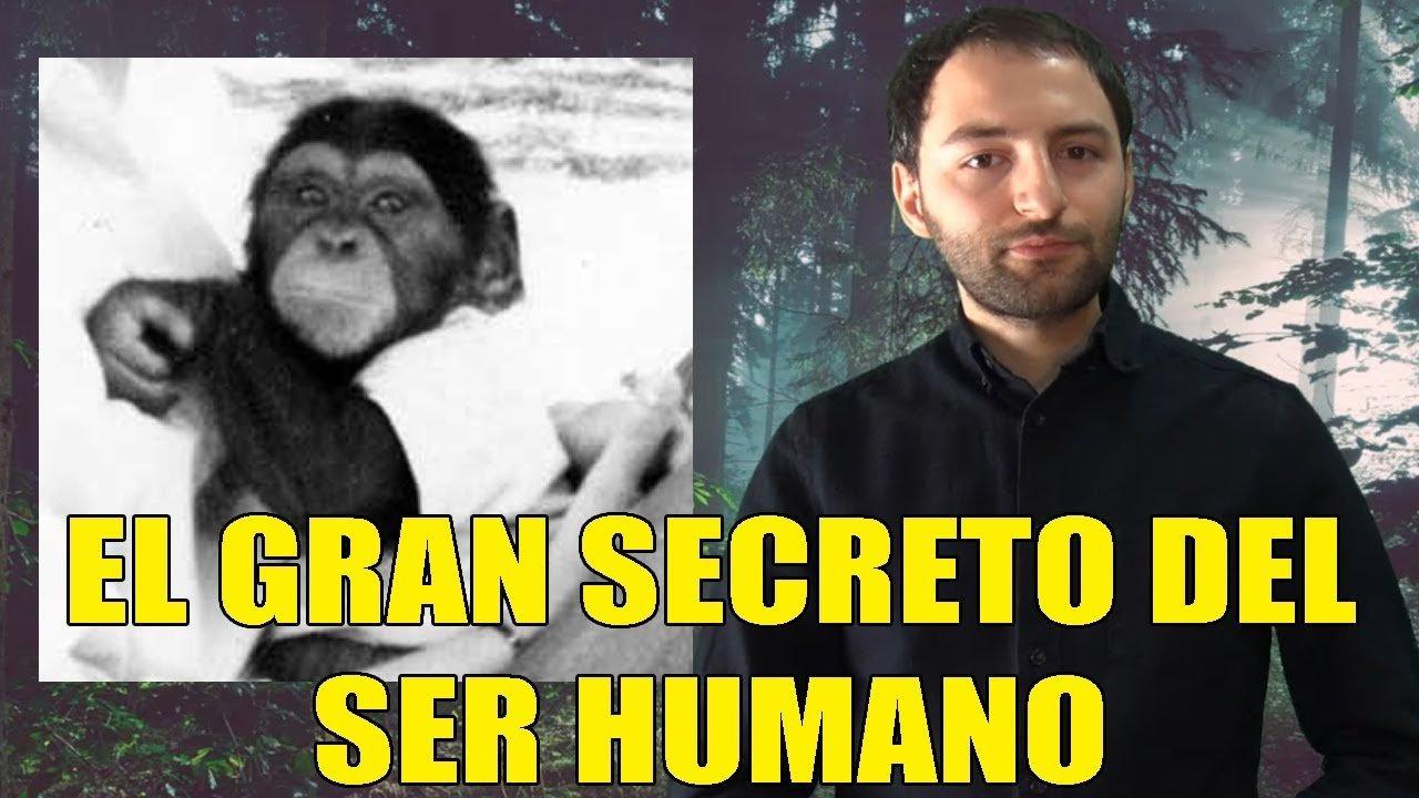 El Mono que Aprendió a Hablar y reveló algo Sorprendente para el mundo