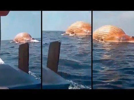 Pescadores encuentran ENORME BULTO flotando en el Mar y Revelan Oscura Verdad